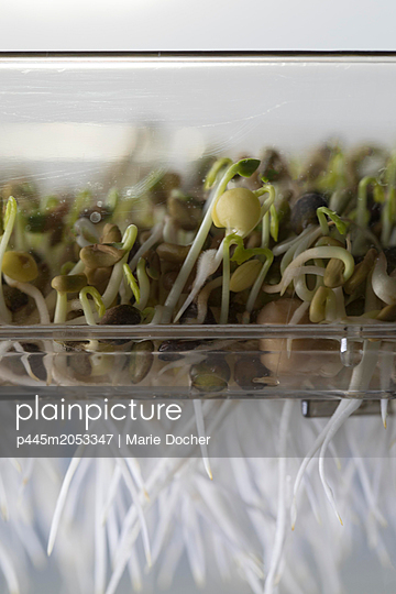Germinated Seeds - p445m2053347 by Marie Docher