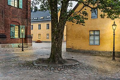 Tree in old town - p312m1139838 by Karl Forsberg