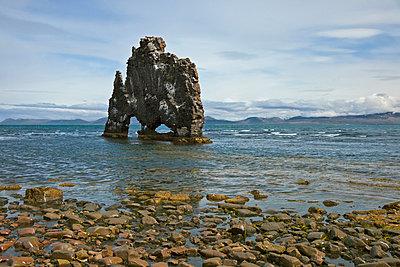 Hvitserkur Rock lies just off the Vatnsnes Peninusla - p6521796 by Nigel Pavitt