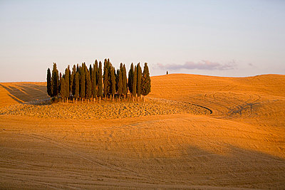 Val d'Orcia, Tuscany, Italy, Europe - p8712888 by Marco Cristofori