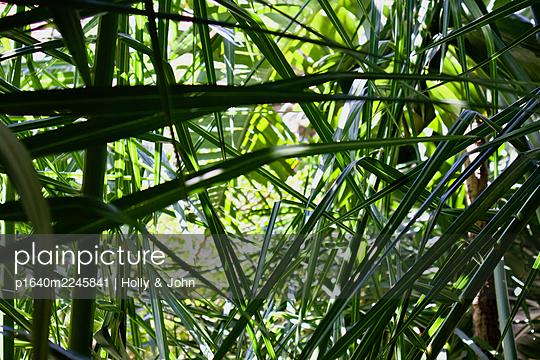 Jungle - p1640m2245841 by Holly & John
