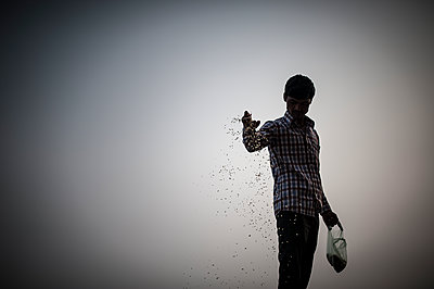 Man throwing rice to feed birds - p1007m1144358 by Tilby Vattard