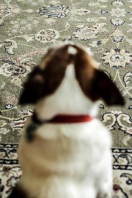 Hund - p1247m1083276 von Hannes S. Altmann