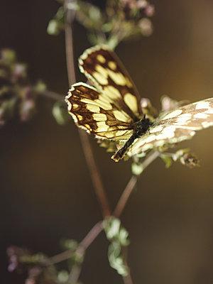 Butterfly - p922m2071534 by Juliette Chretien