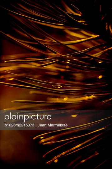 Dwarf mountain pine needles with raindrops (Pinus mugo) - p1028m2215973 von Jean Marmeisse