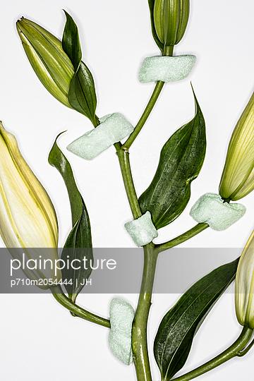 Kunstblumen - p710m2054444 von JH
