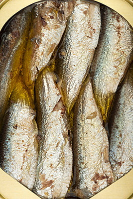 Packed sardines in a can - p301m714507f by Stewart Waller