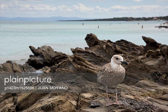 Spiaggia de la Pelosa  - p1423m1525596 von JUAN MOYANO