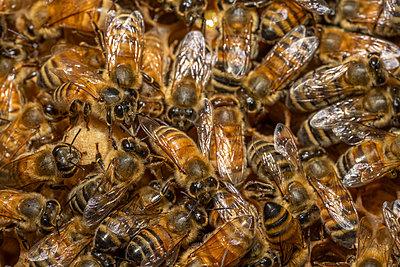 Honey bees sit on top of  the hive in Barwick, Georgia. - p1166m2290053 by Cavan Images