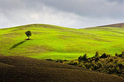 Einsamer Baum - p1256m2098941 von Sandra Jordan