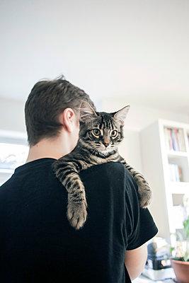 Maine-Coon Kitten - p1494m2135110 by Inkje Drescher