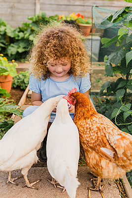 Little girl feeding chickens in allotment - p300m2030071 by Nicole Matthews