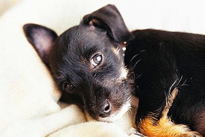 A puppy. - p31220703f by Anna Skoog