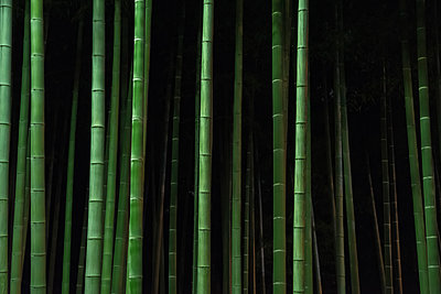 Bamboo trees growing in forest at night - p1166m2060536 by Cavan Social