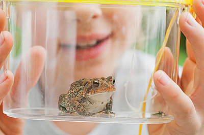 Girl looking at toad in terrarium, cropped - p624m710860f by Michele Constantini