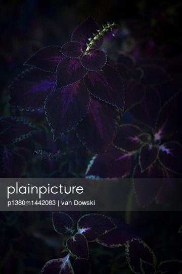 Dunkle Blumen - p1380m1442083 von van Dowski