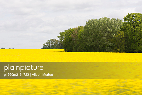 Field of Rapeseed - p1560m2184723 by Alison Morton
