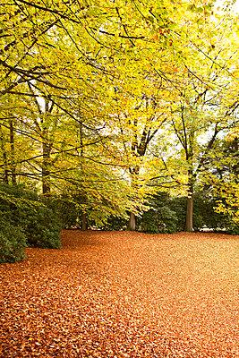 Herbstlaub im Wald - p1092m1108856 von Rolf Driesen