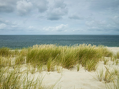 Dünengras am Meer - p1200m1147169 von Carsten Görling