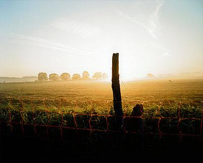 Germany, Lower Saxony, Melle, Morning mist - p3004910f by Mel Stuart