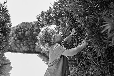 Caucasian baby boy peering through bushes in backyard - p555m1411338 by Marc Romanelli