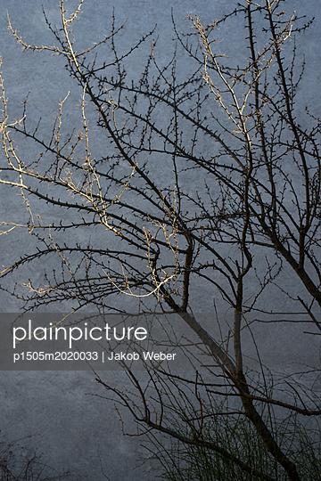 Lichtspitzen - p1505m2020033 von Jakob Weber