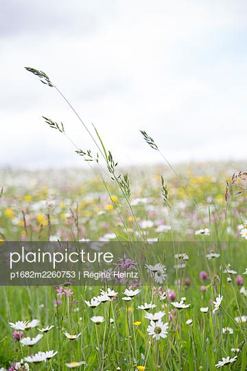 Flowered meadow - p1682m2260753 by Régine Heintz