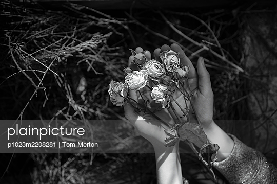Girl holding dead roses - p1023m2208281 by Tom Merton