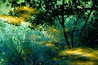 Artistic woodland scene - p1072m828892 by chinch gryniewicz