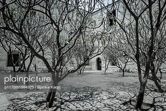 Bäume in einem Innenhof - p1170m1584929 von Bjanka Kadic