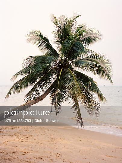 Palme - p751m1584793 von Dieter Schwer
