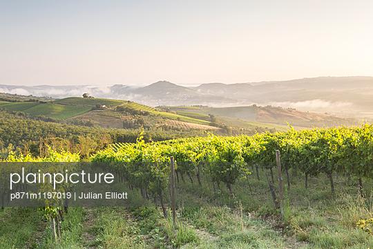 Vineyards near to Orveito, Umbria, Italy, Europe - p871m1197019 by Julian Elliott