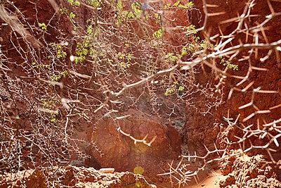 Namibia - p1305m1132749 von Hammerbacher