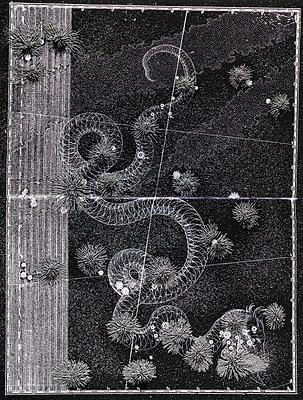 Serpens - p1558m2175294 by Luca Casonato
