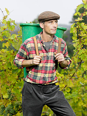 A vintner carrying a bucket of grapes on his back - p3018499f by Paul Hudson