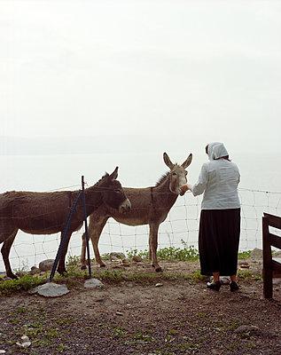 Frau füttert Esel - p436m1445467 von R. Petersen