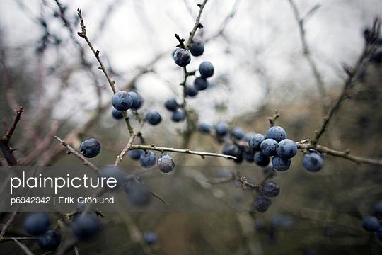 Berry Bush - p6942942 by Erik Grönlund