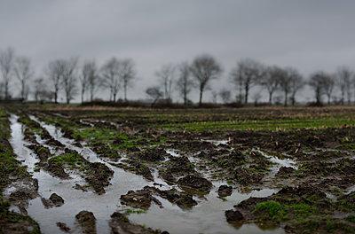 Gefrorenes Feld - p1132m2168057 von Mischa Keijser
