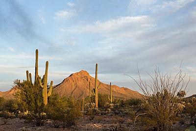Saguaro National Park - p1291m1548070 by Marcus Bastel