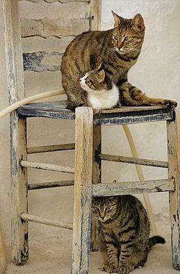 Katzen auf Santorini - p3300469 von Harald Braun