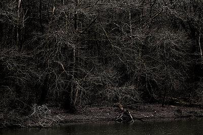 Kahle Bäume am Flussufer - p910m1195593 von Philippe Lesprit