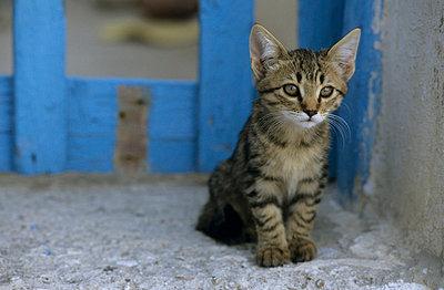 Katze - p3300498 von Harald Braun