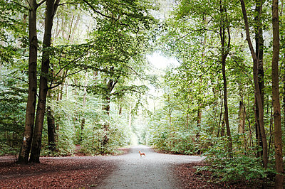 Waldweg - p751m1584771 von Dieter Schwer