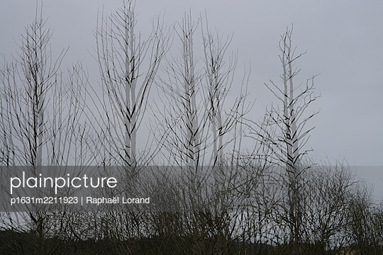 Kahle Bäume - p1631m2211923 von Raphaël Lorand