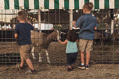 Rear view of siblings looking at goat in animal pen - p1166m1521816 by Cavan Images