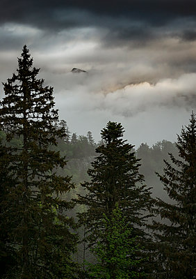 Thunderclouds over deciduous forest, mountain range in the fog, France - p910m2196466 by Philippe Lesprit