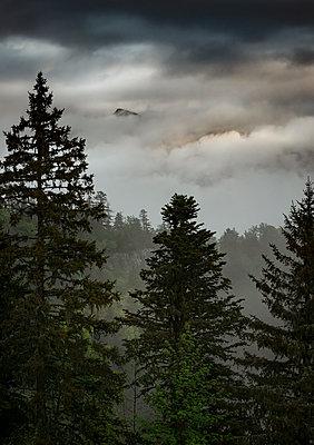 Gewitterwolken über einem Nadelwald, Bergkette im Nebel, Frankreich - p910m2196466 von Philippe Lesprit