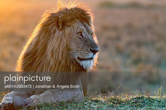 p651m2033472 von Jonathan & Angela Scott