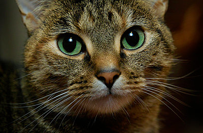 Cats face. - p1072m830468 by Stephen Cliffe