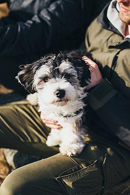 Puppy - p1507m2022500 by Emma Grann